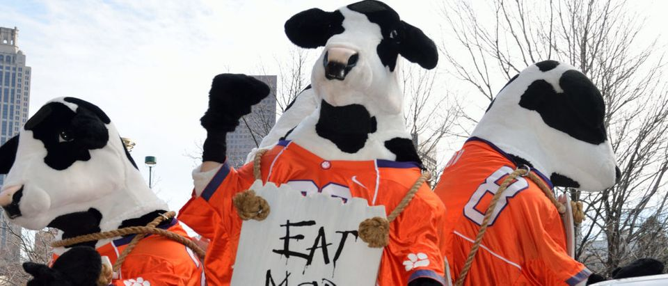 "Pictured are the ""Eat Mor Chikin"" cows at a parade leading up to the Chick-fil-A bowl game. Shutterstock/Paul Brennan"
