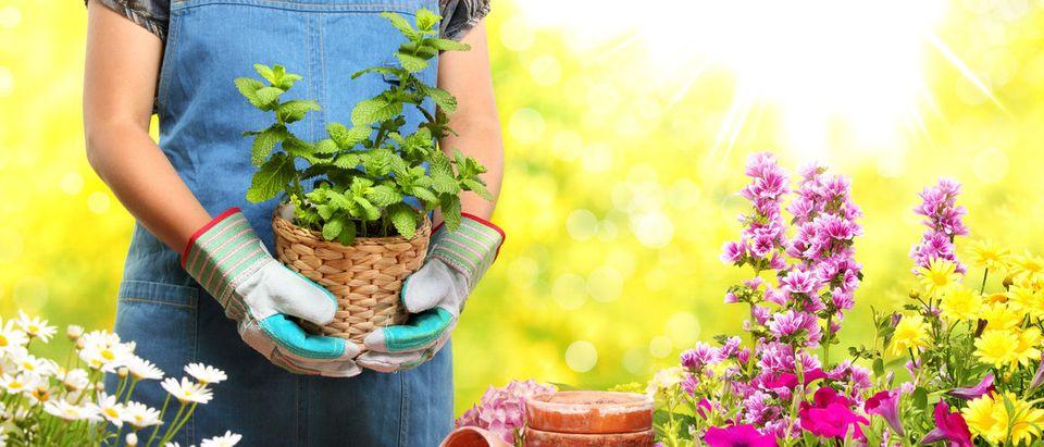 Gardener holding potted plant. (Shutterstock/Sofiaworld)