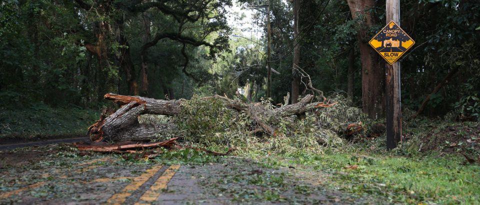 Tree down Florida