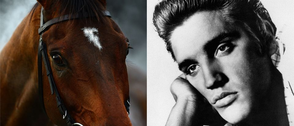 Elvis and horse side-by-side/ Getty Images collage
