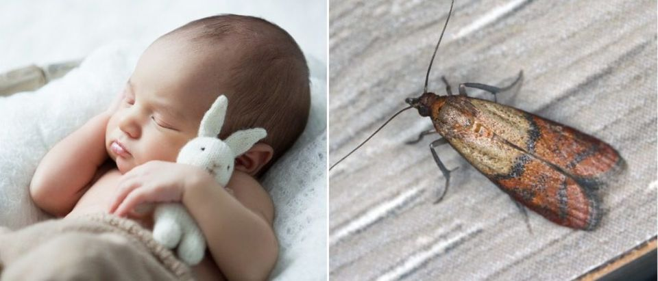 Baby and mealmoth
