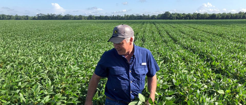 FILE PHOTO: FILE PHOTO: Soybean farmer Schexnayder Jr. overlooks his farm outside Baton Rouge in Erwinville