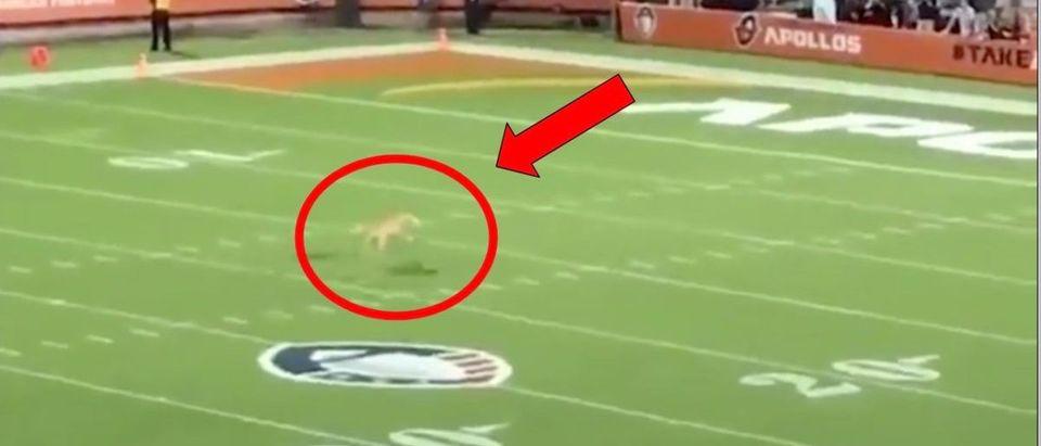 Dog catches frisbee (Credit: Screenshot/Twitter Video https://twitter.com/sportscenter/status/1099825917944311811?s=21)