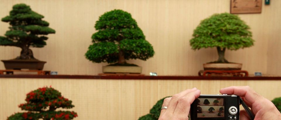 A visitor takes a photograph of bonsais during the Chelsea Flower Show in London May 25, 2010. REUTERS/Stefan Wermuth