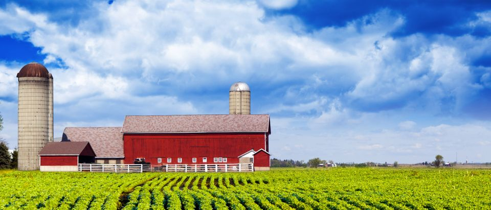 Catholic Family banned from farmer's market for not hosting a gay wedding Shutterstock, MaxyM