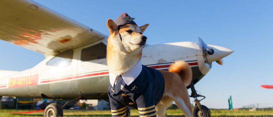 Dog-Plane-Shutterstock