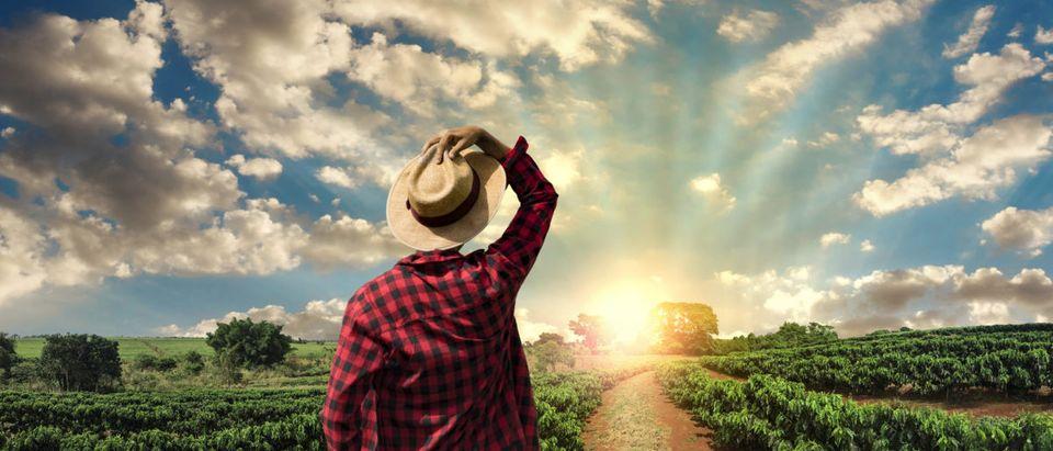 Farmer. Shutterstock