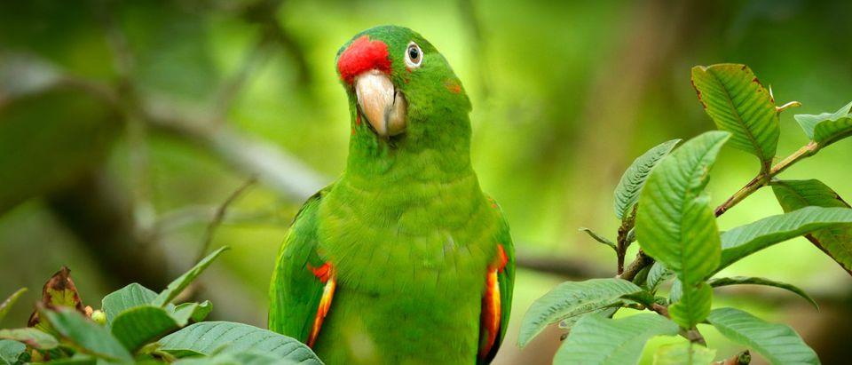 A Green Parrot (Shutterstock/ Ondrej Prosicky)