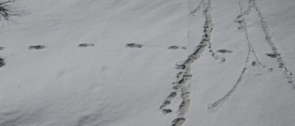 Footprints are seen in the snow near Makalu Base Camp in Nepal, in this picture taken on April 9, 2019 obtained from social media on April 30, 2019. Indian Army/via REUTERS