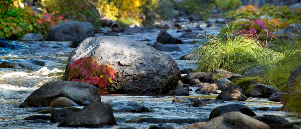 Deer Creek dappled in sunlight in Lassen County near Chico on an Autumn day. (Leslie Wells/Shutterstock.com)