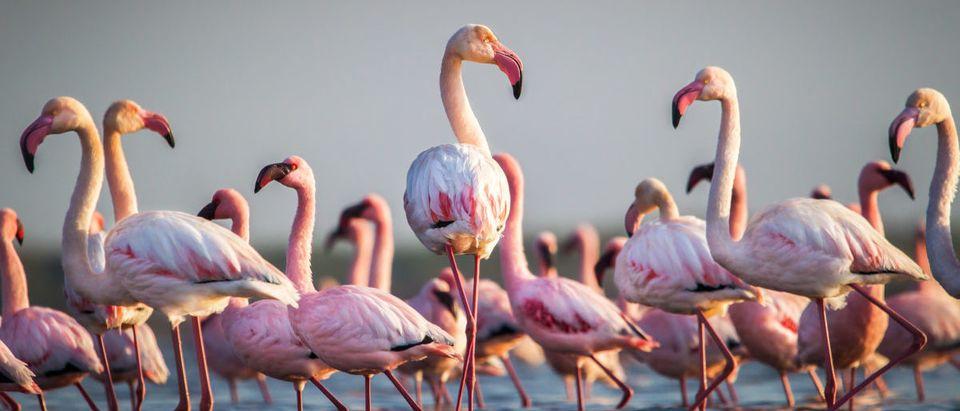 A flamingo was euthanized. SHUTTERSTOCK/ John Michael Vosloo