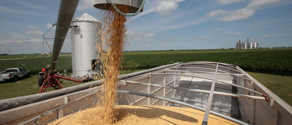 U.S. Soybean Futures Plunge Amid Renewed Fears Of Trade War With China