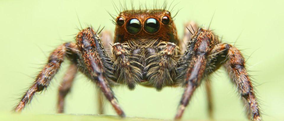 Spider-Shutterstock