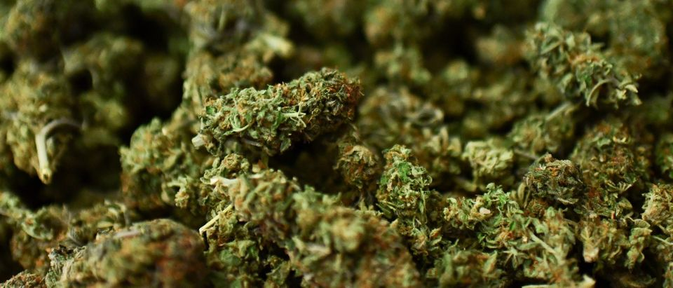 "A picture taken on June 5, 2019 shows Marijuana buds, often simply called weed or pot, which is the unprocessed form of the female cannabis plant, at the ""Hemp Embassy"" store in Milan, one of the first shops in Italy dedicated to cannabis. - Hemp is ""legal"" marijuana as the THC psychotropic substance is blocked, but can be used for textiles, food, cosmetics and other purposes. (Photo by Miguel MEDINA / AFP) (Photo credit should read MIGUEL MEDINA/AFP/Getty Images)"