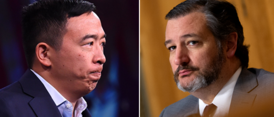 Andrew Yang (Josh Edelson, Getty), Ted Cruz (Stefani Reynolds, Getty)