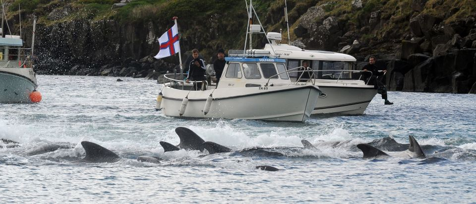 DENMARK-FISLANDS-FISHING-WHALE-TRADITIONS