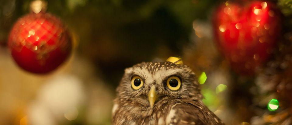 Owl_Christmas_Tree