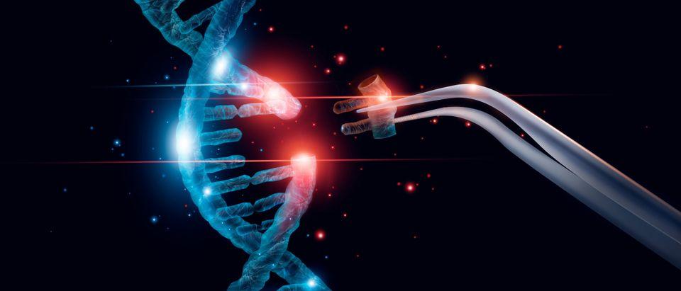 Genetic editing. (Shutterstock/PopTika)