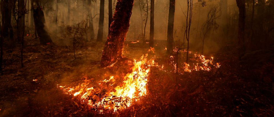 Small spot fires still burn on January 05, 2020 between Orbost and Cann River along the Princes Highway, Australia. (Darrian Traynor/Getty Images)
