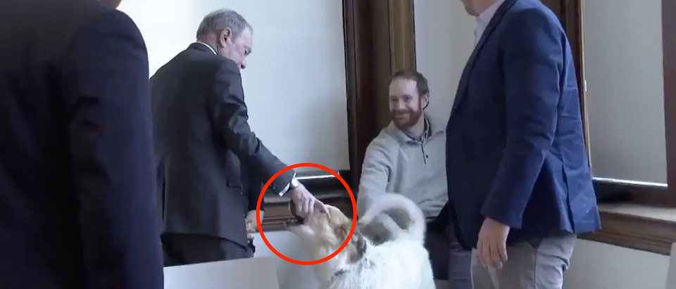 Mike Bloomberg shook a dog's mouth while on the campaign trail Monday. (Screenshot Twitter Nicole Sganga)