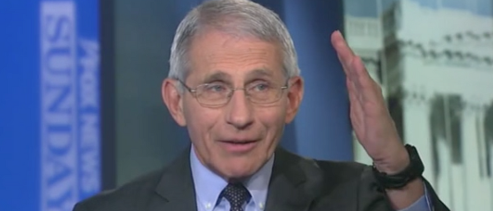 "Dr. Anthony Fauci appears on ""Fox News Sunday."" Screenshot/Fox"