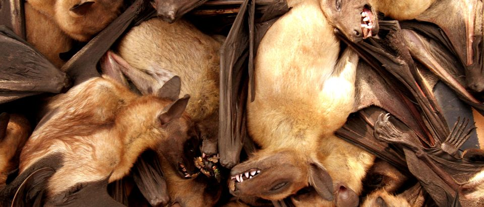Fruit bats are seen for sale at a food market in Brazzavile