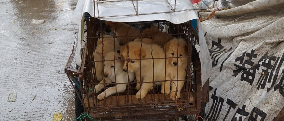 CHINA-ANIMAL-CULTURE