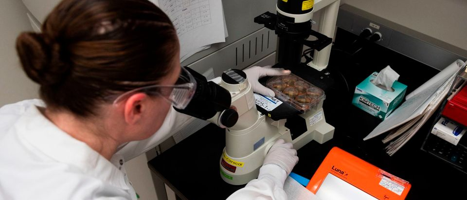 Dr. Rhonda Flores looks at protein samples at Novavax labs in Rockville, Maryland on March 20, 2020, one of the labs developing a vaccine for the coronavirus, COVID-19. (ANDREW CABALLERO-REYNOLDS/AFP via Getty Images)