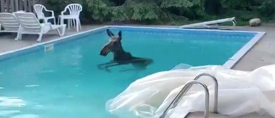 Moose_Pool