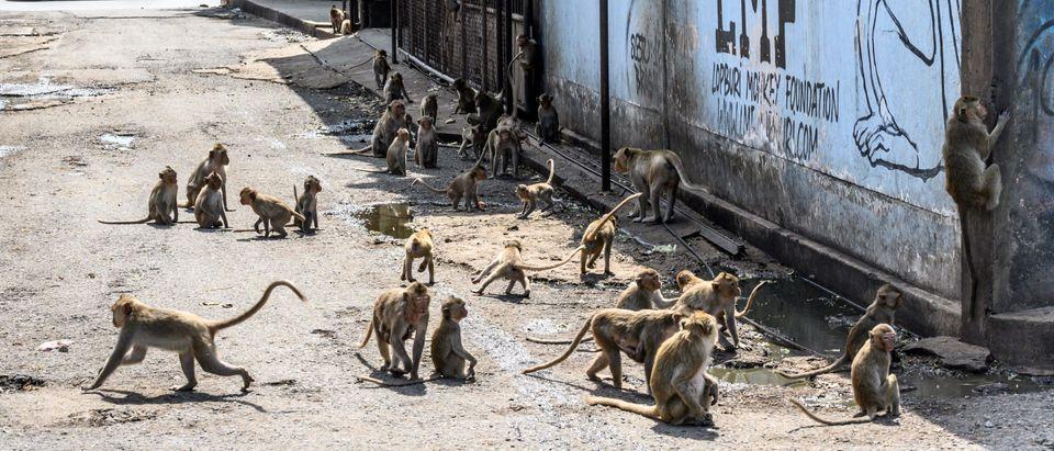 THAILAND-TOURISM-ANIMAL-HEALTH