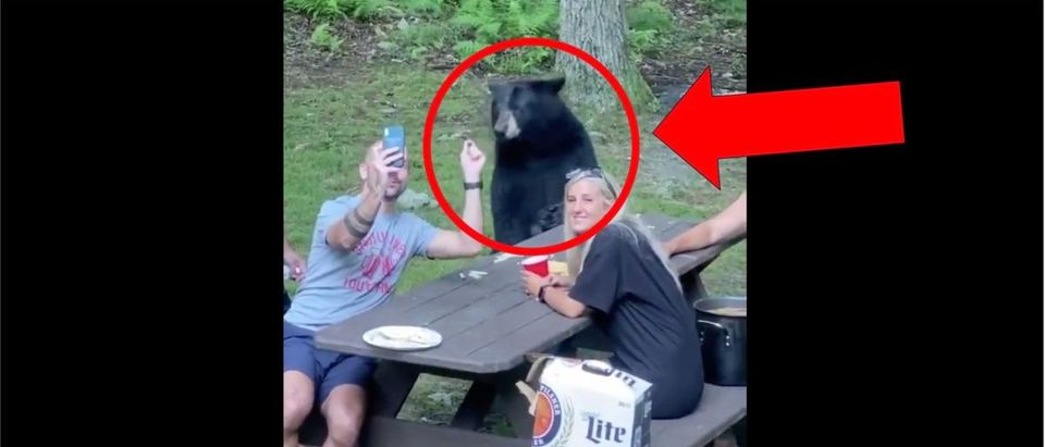 Bear Picnic Video (Credit: Screenshot/Twitter Video https://twitter.com/barstoolsports/status/1293196650249248768)