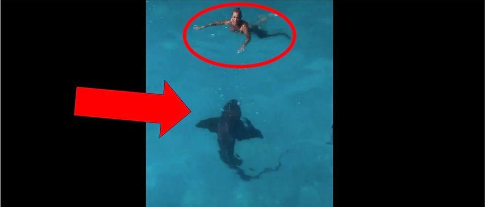 Shark Slide Video (Credit: Screenshot/Twitter Video https://twitter.com/barstoolsports/status/1292485899343847425)