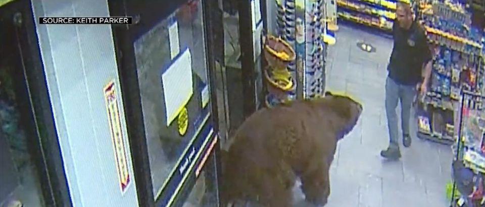Bears in Tahoe Store