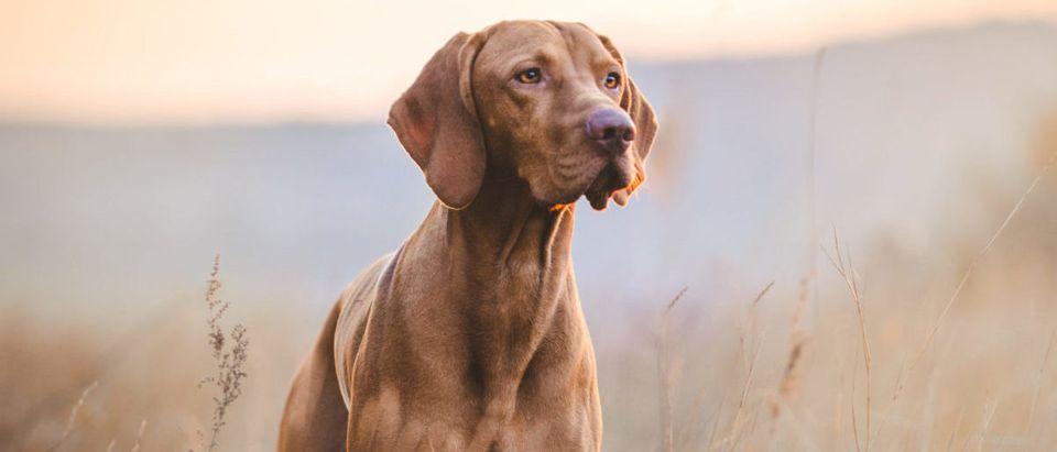 Dog (Credit: Shutterstock/TMArt)
