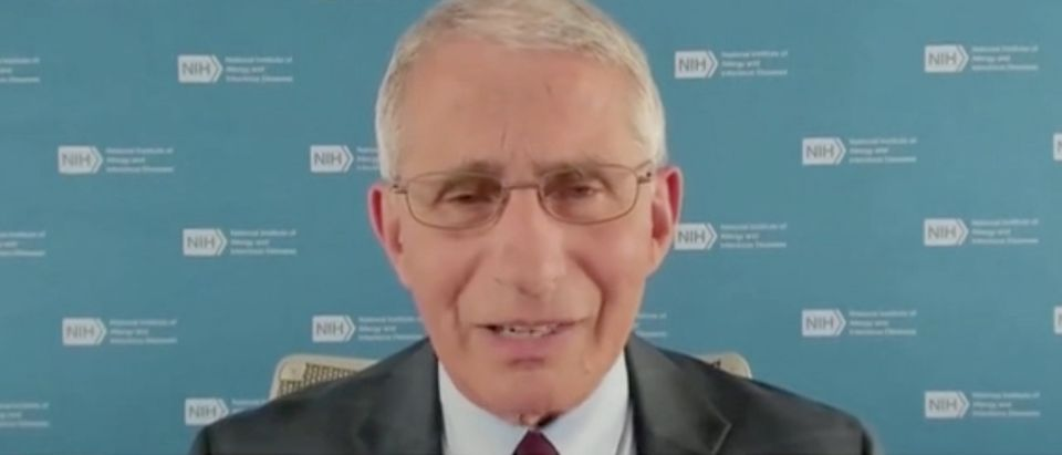 """Dr. Anthony Fauci appears on """"The Daily Briefing."""" Screenshot/Fox News"""