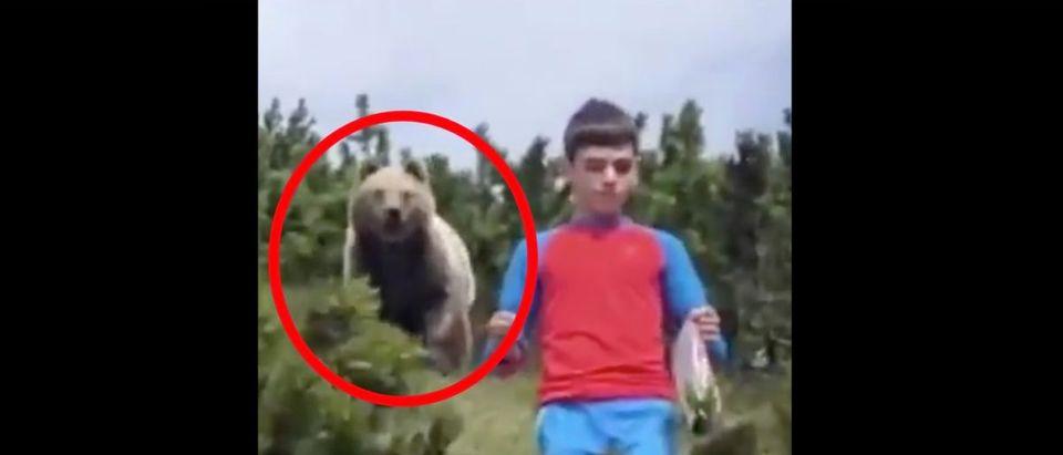 Bear Video (Credit: Screenshot/Twitter Video https://twitter.com/TheSun/status/1317870556784590848)