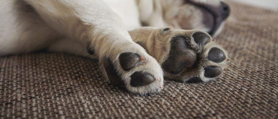 Puppy (Credit: Shutterstock/manushot)