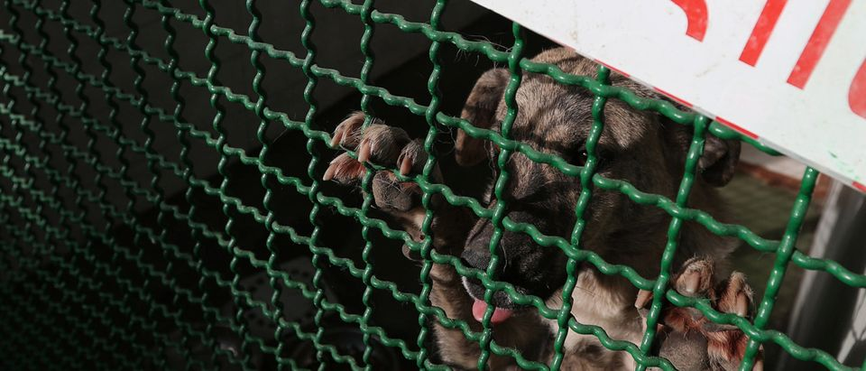 A stray dog looks through a cage at the Animals Monitoring Agency's shelter in Tbilisi