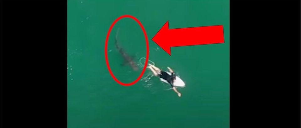 Shark Surfer (Credit: Screenshot/YouTube https://www.youtube.com/watch?v=LTymSJLJOT0&feature=youtu.be)