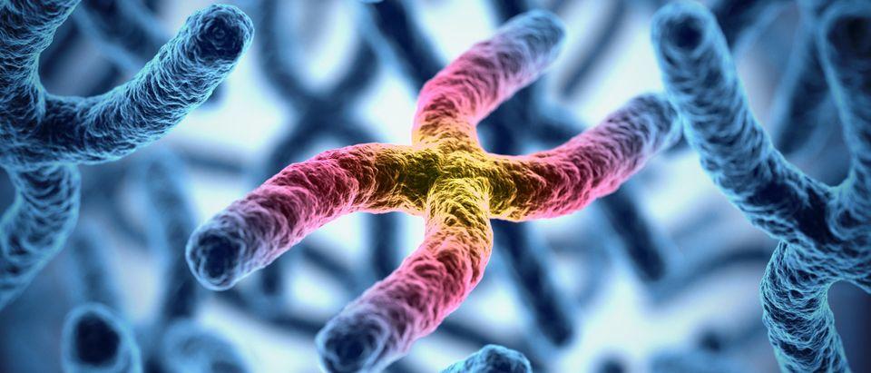 Chromosomes by koya979. Shutterstock