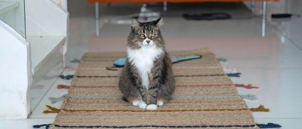 HONG KONG-ANIMALS-INTERNATION-CAT-DAY