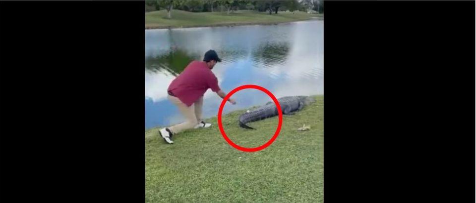 Alligator_Golfball_Tail
