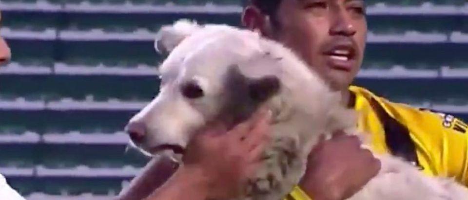 Bolivia_Dog_Soccer