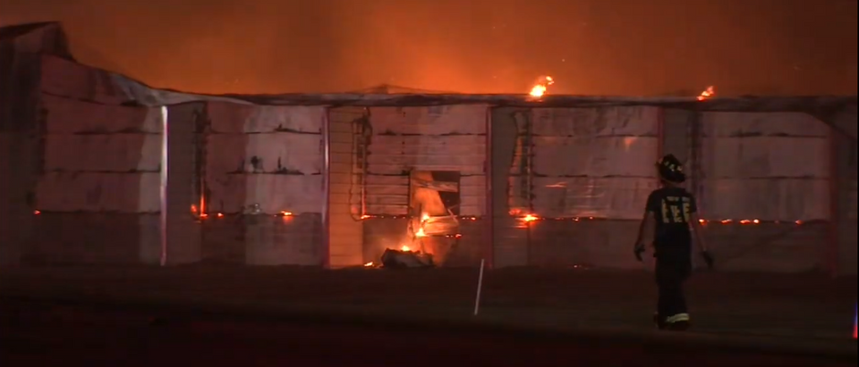 Egg Farm Fire Kills Thousands Of Chickens In Florida