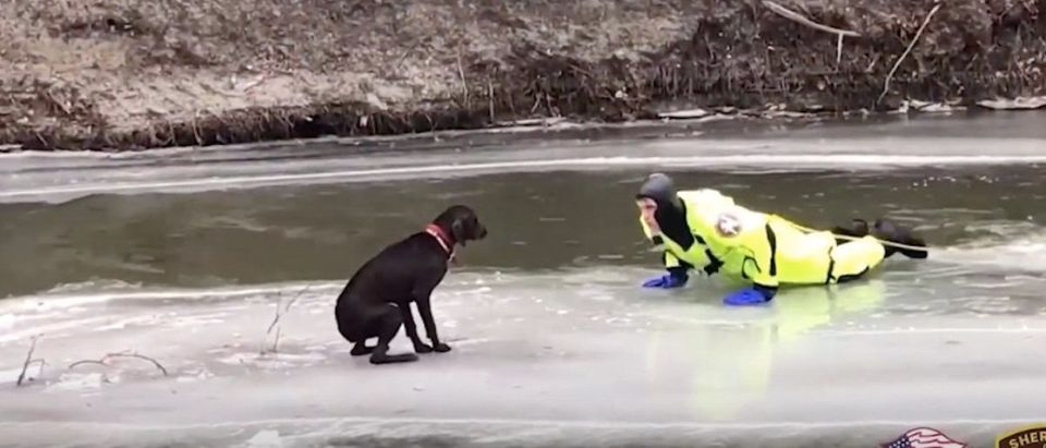 Dog Rescued From Icy River
