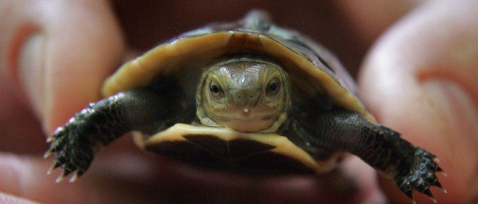 Endangered Turtle Born At Bristol Zoo