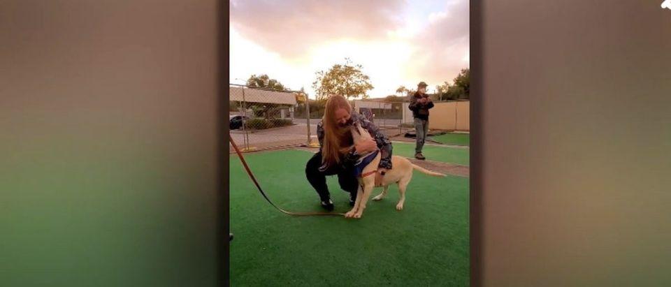 Military Member Reunites With Dog