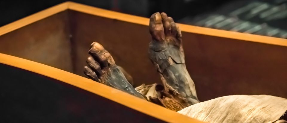 Ancient Mummy Legs