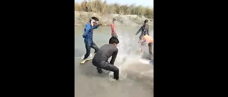 Dolphin Beaten