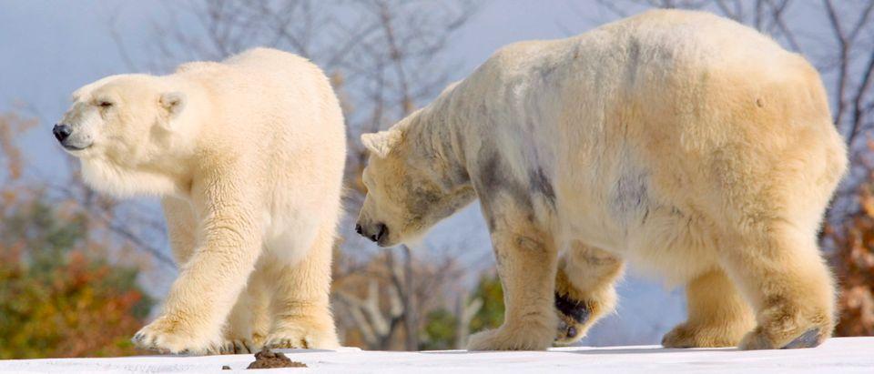 WORLD's LARGEST POLAR BEAR EXHIBIT